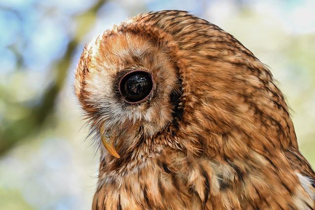 owl-2866702_640